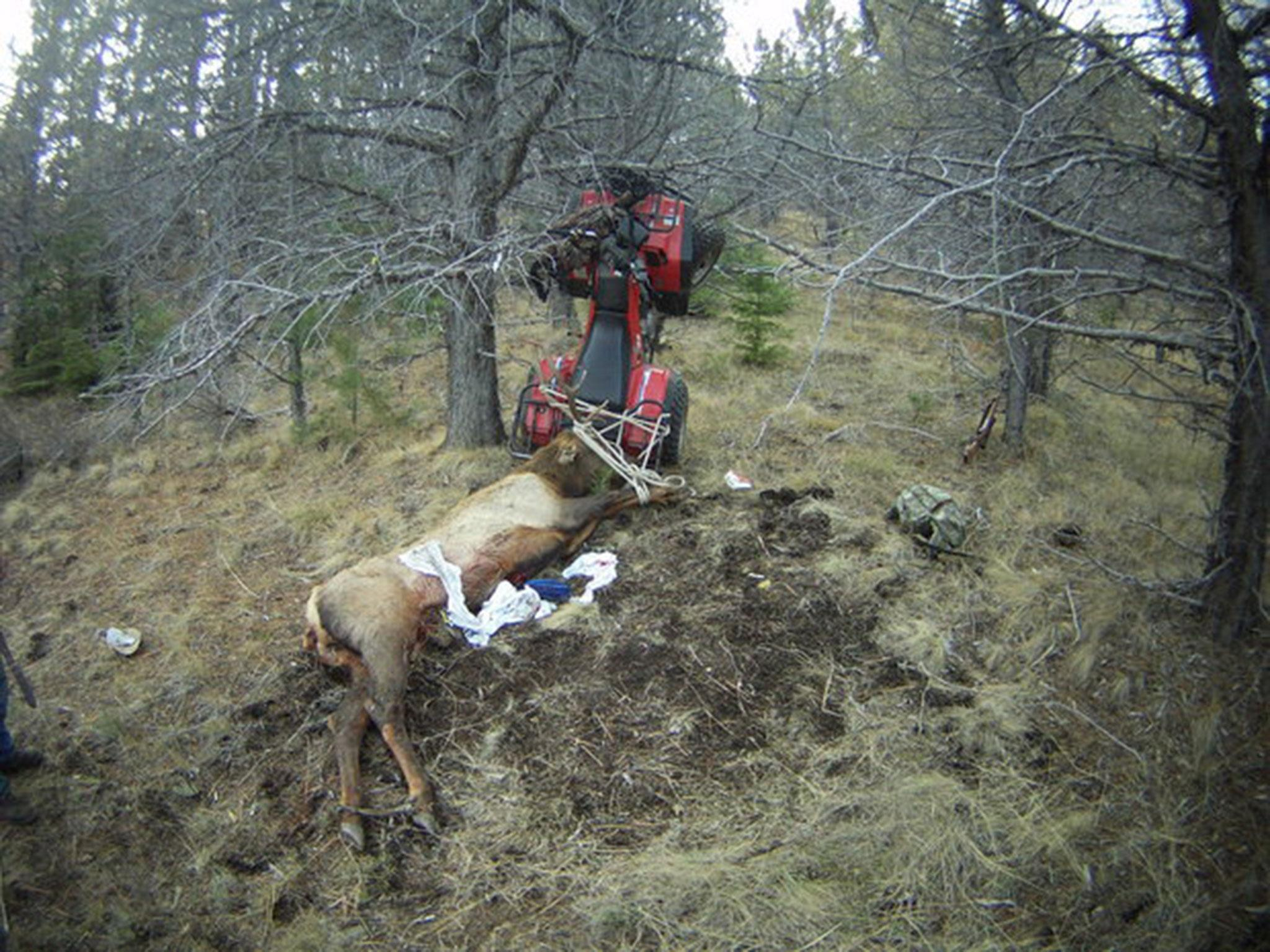 Hunter Gets Impaled By Elk He Just Killed The Independent