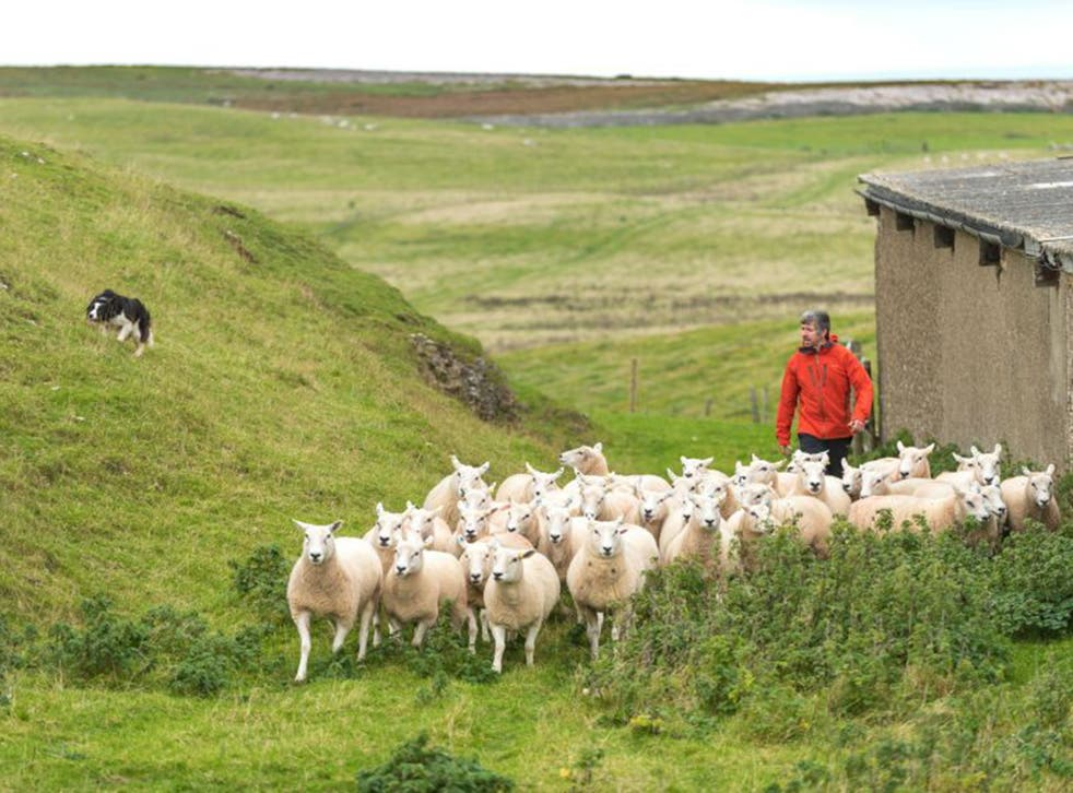 Small producers can benefit from Brexit