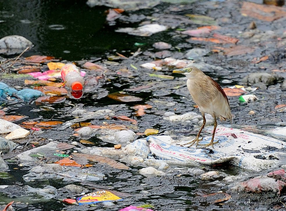 An egret perches on plastic bags and garbage strewn on a lake in Colombo, Sri Lanka