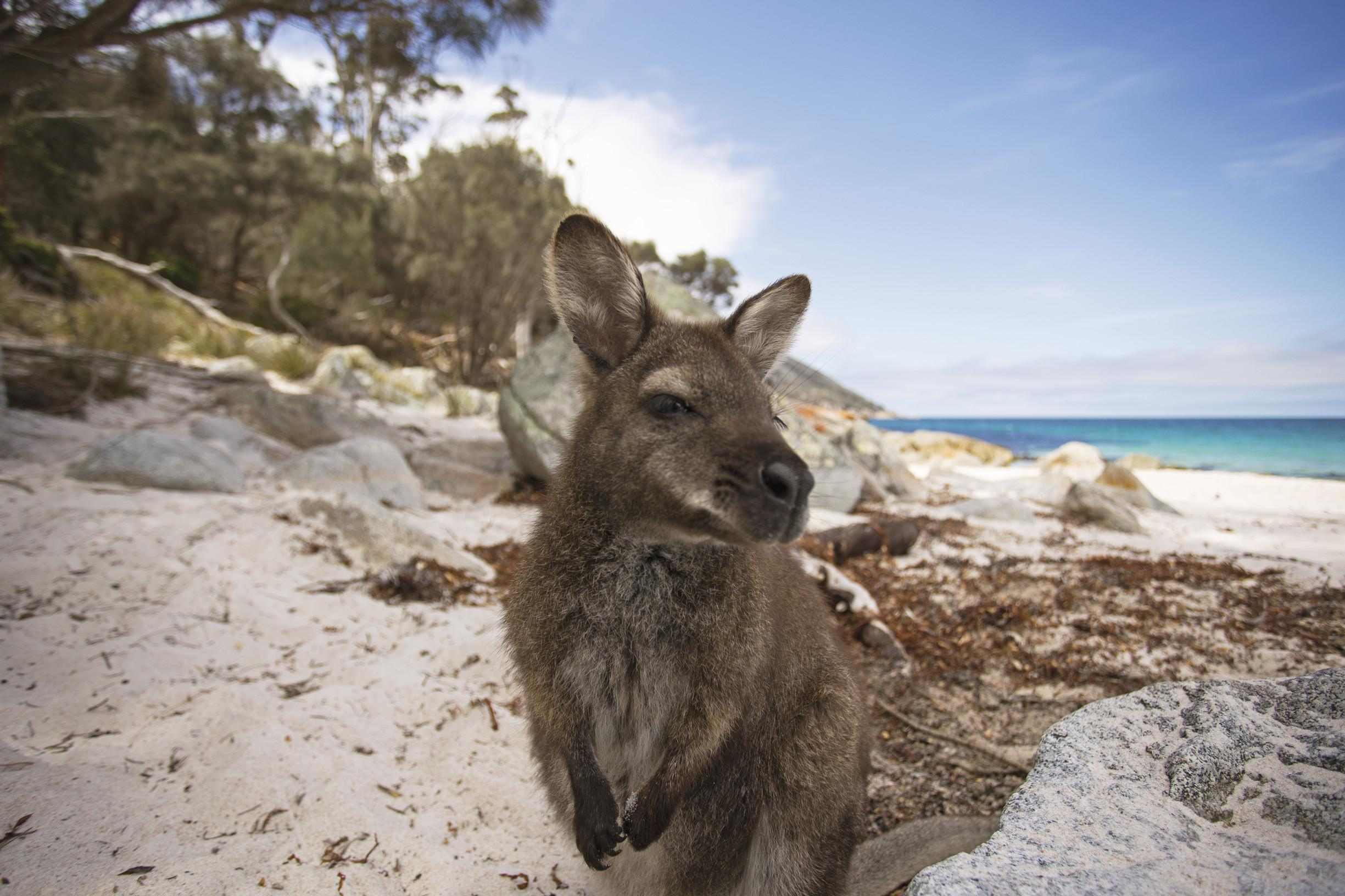 Wallabies Wombats And Convicts Adventures Off The Coast Of Tasmania The Independent The Independent
