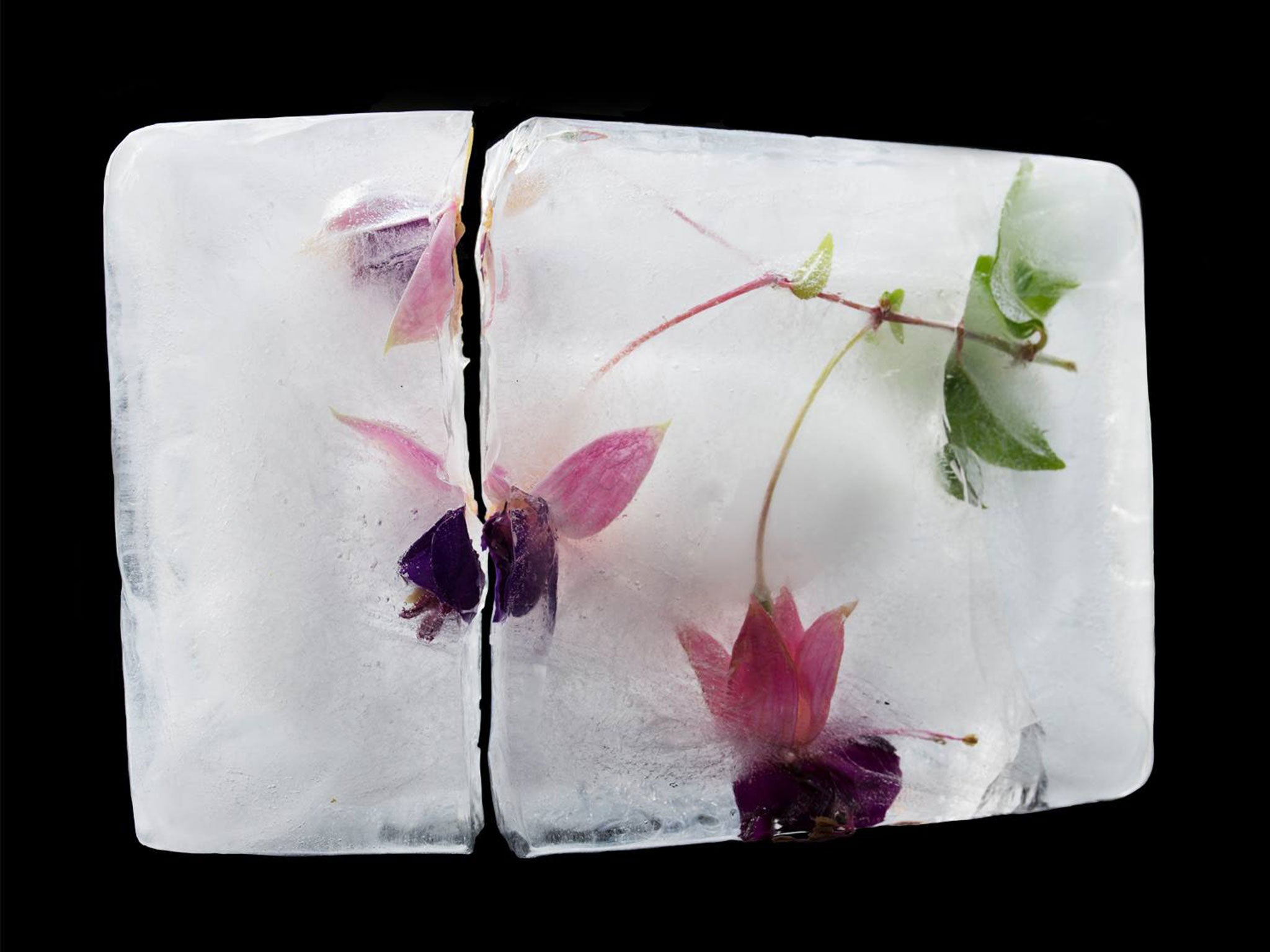 Frozen in time: Photographs of flowers in ice represent lost memories of those suffering from Alzheimer's