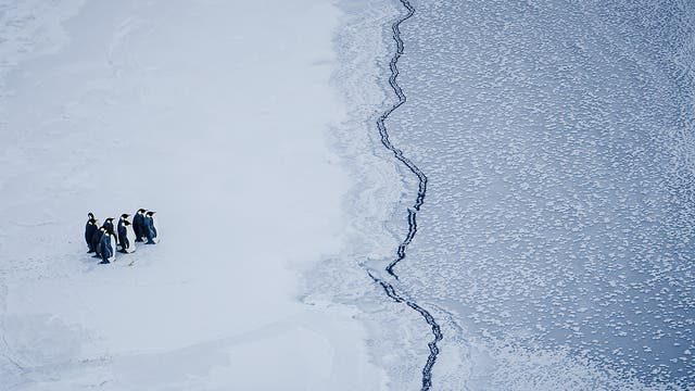 A group of emperor penguins face a crack in the sea ice, near McMurdo Station, Antarctica