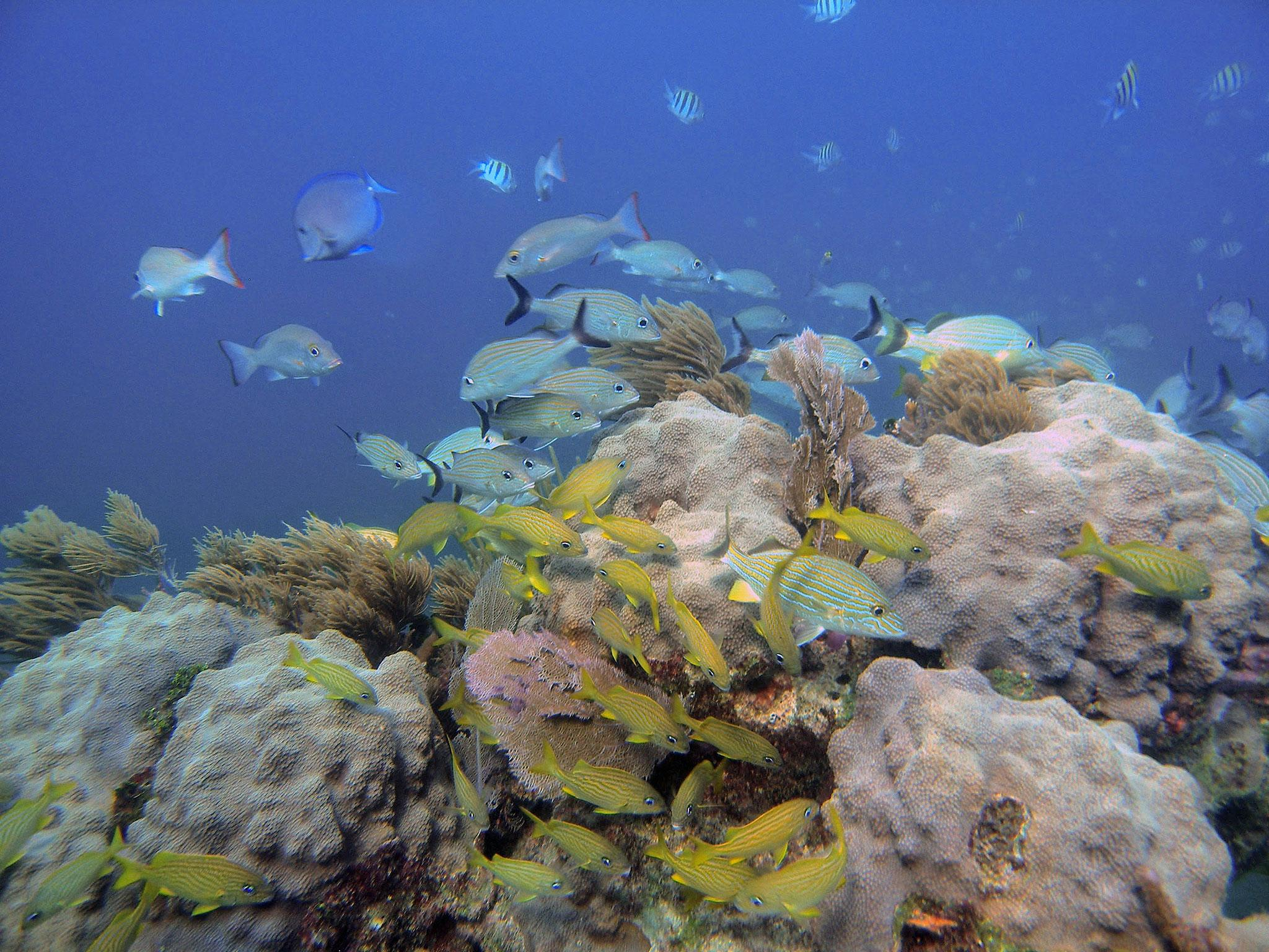 coral reefs may yet survive global warming study suggests