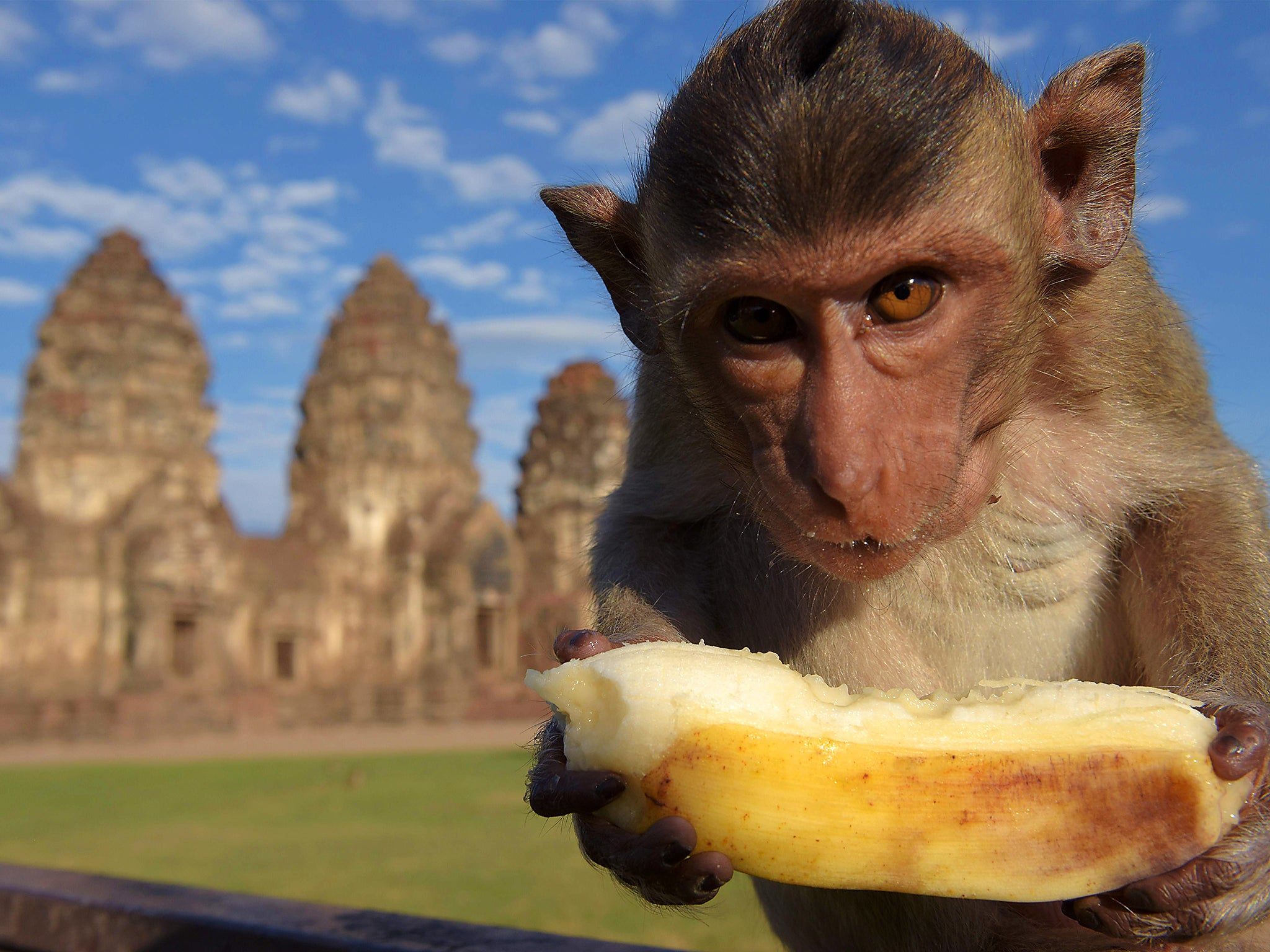 Monkeys discovered holding tourists' phones and cameras to ransom