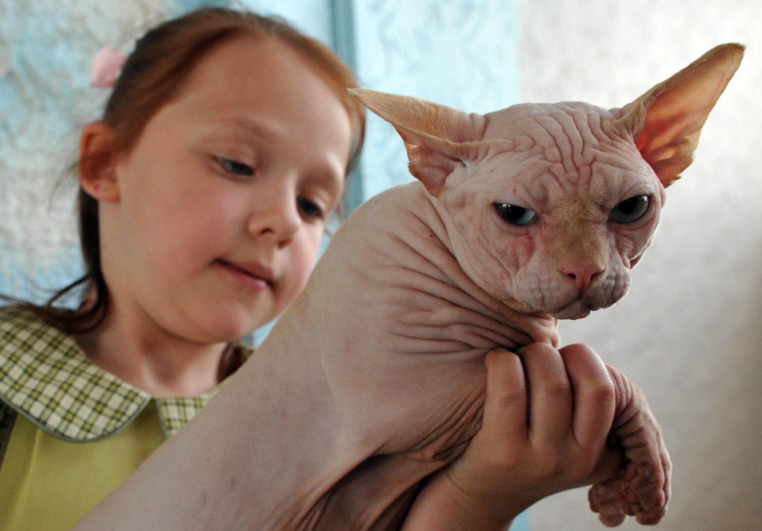 Scammers are shaving regular kittens and selling them as £500