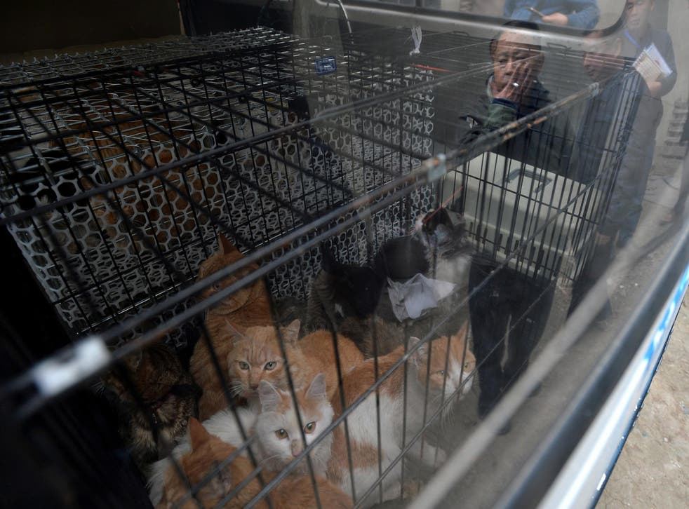 Rescued cats look out from a car as Huang Pingfu, the owner of a cat slaughtering spot stands next to the car as a legal enforcement team intervene in Chengdu, Sichuan Province, China, November 23, 2016