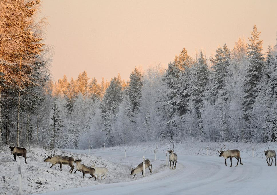 Five things to do in Lapland when there s no snow  a0b36f3ed