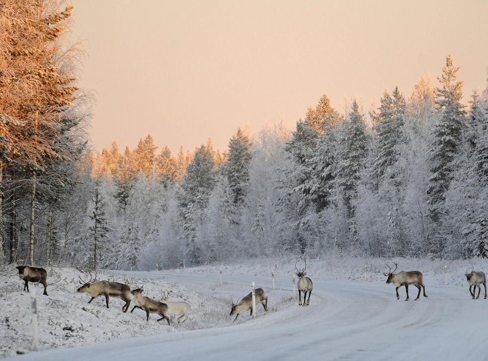 What Lapland should look like in December