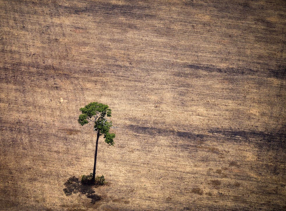 <p>Deforestation has stripped parts of the Amazon, such as here in the state of Para, Brazil</p>
