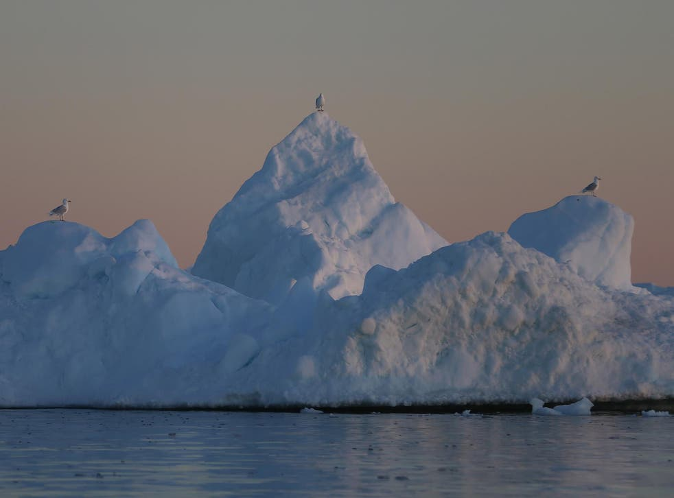 Seagulls sit on an iceberg on July 22, 2013 in Ilulissat, Greenland
