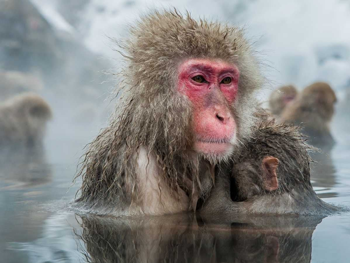 Monkeys - latest news, breaking stories and comment - The