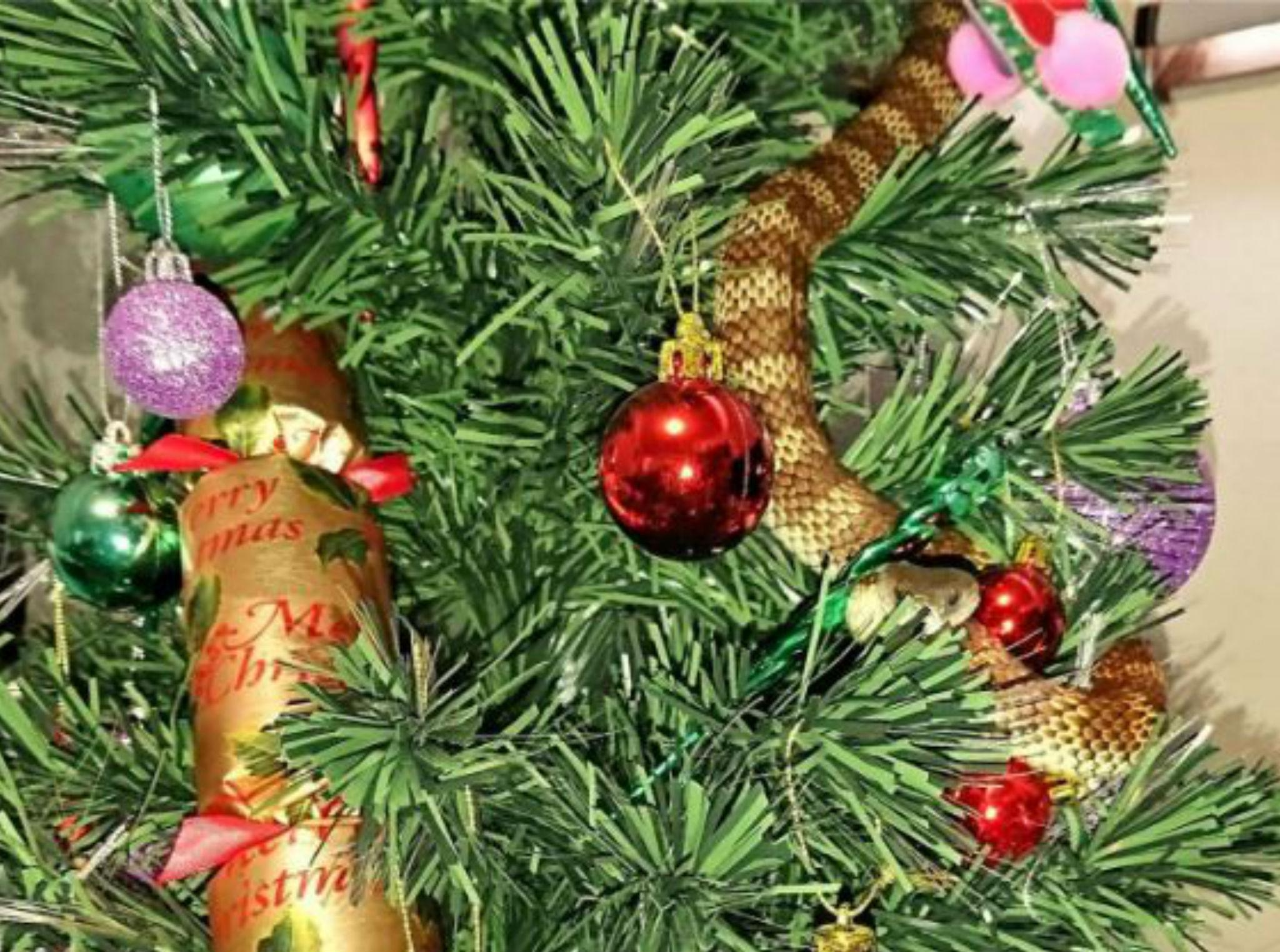 Christmas Trees and Trappings Can Fan Fire Risk