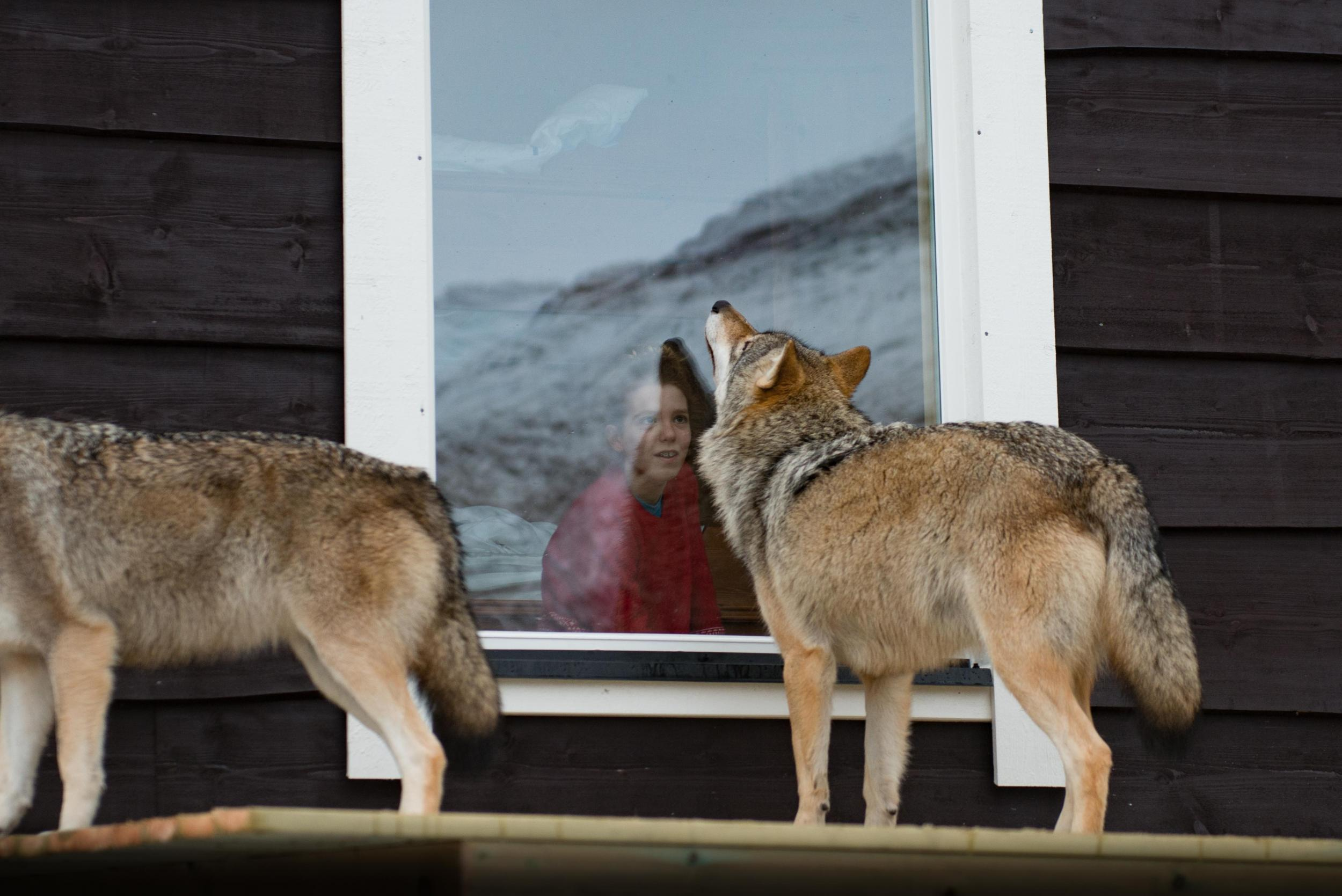 Whale watching and wolves at your window: Wild adventures in Norway's far north