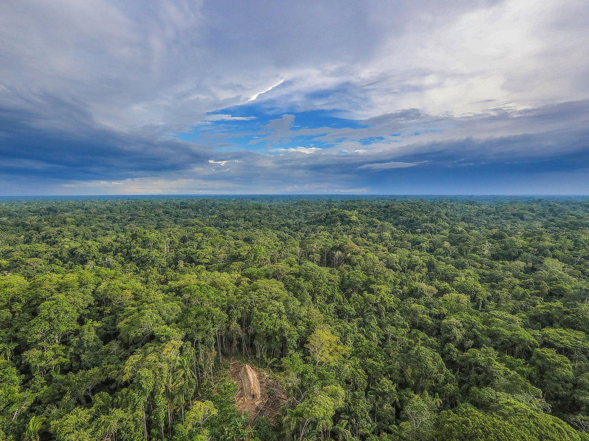 Thumbnail for Amazon jungle faces death spiral of drought and deforestation, warn scientists