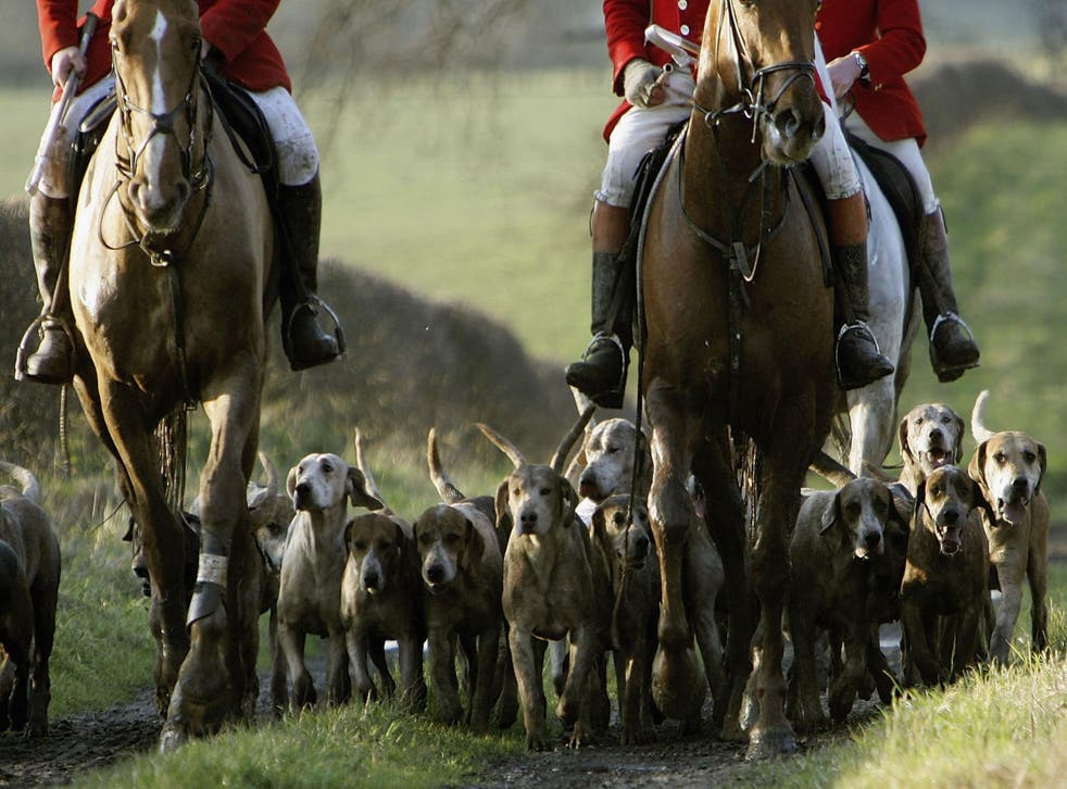 Some groups are using legal loopholes to stage fox hunts on Boxing Day