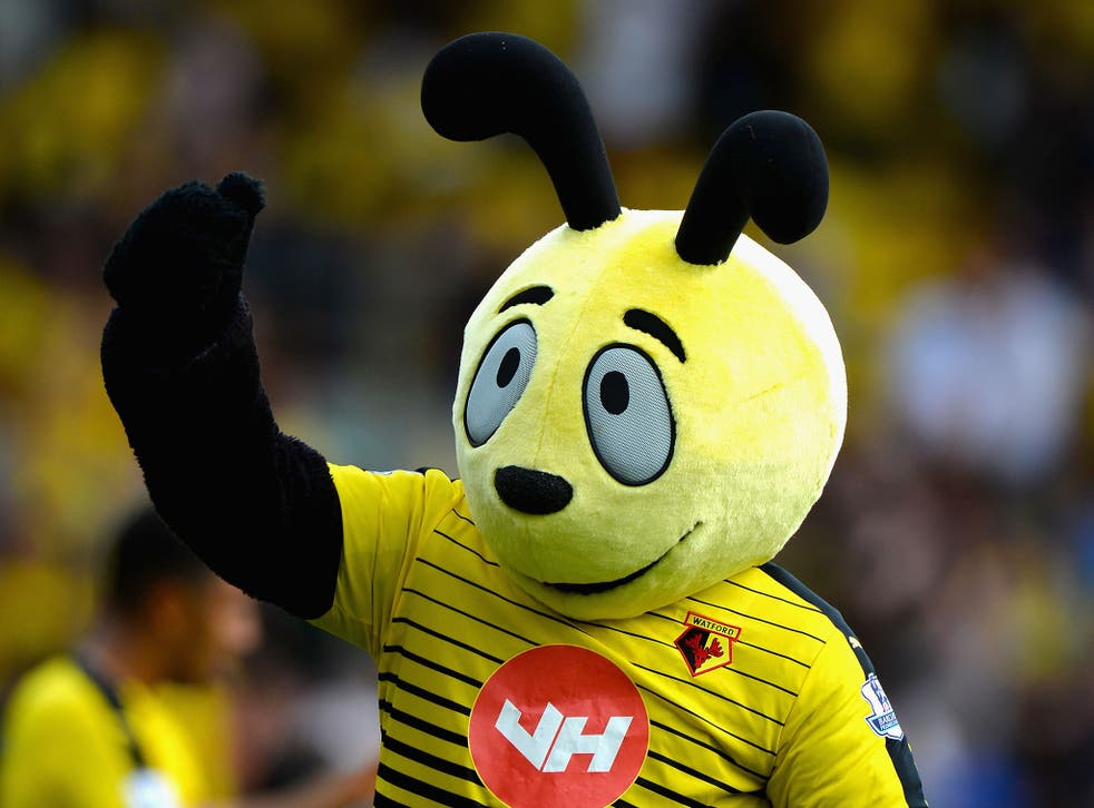 'Harry the Hornet' dived in front of Zaha after the final whistle