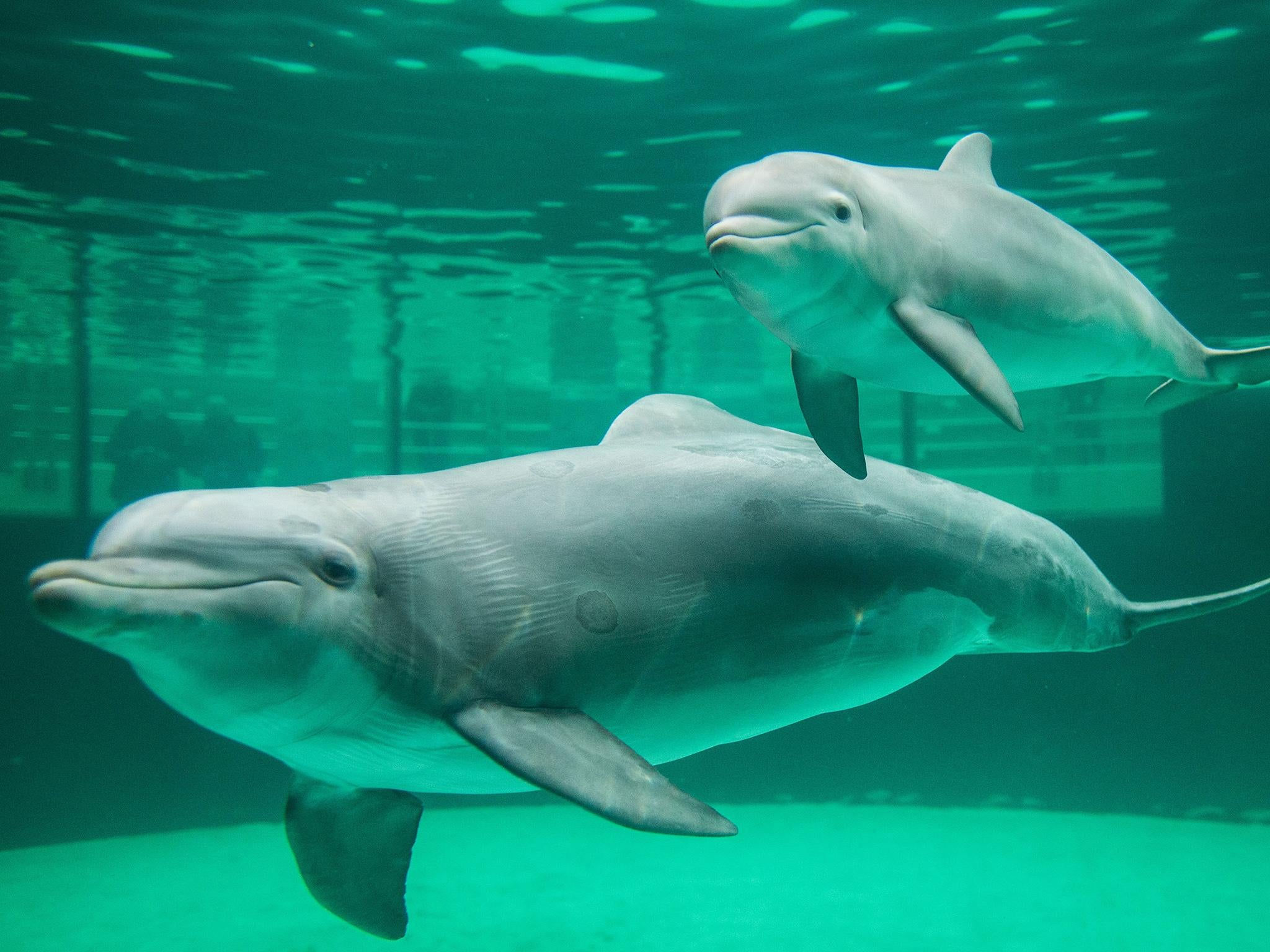 dolphins escape sea park in japanese town infamous for brutal