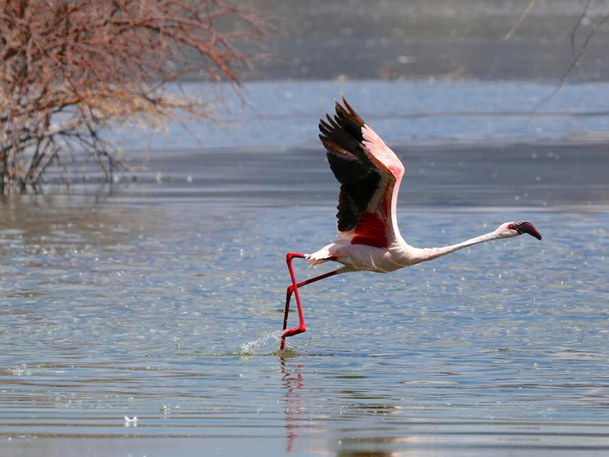 Scientists balanced a dead flamingo on one leg to unlock the bird\'s ...