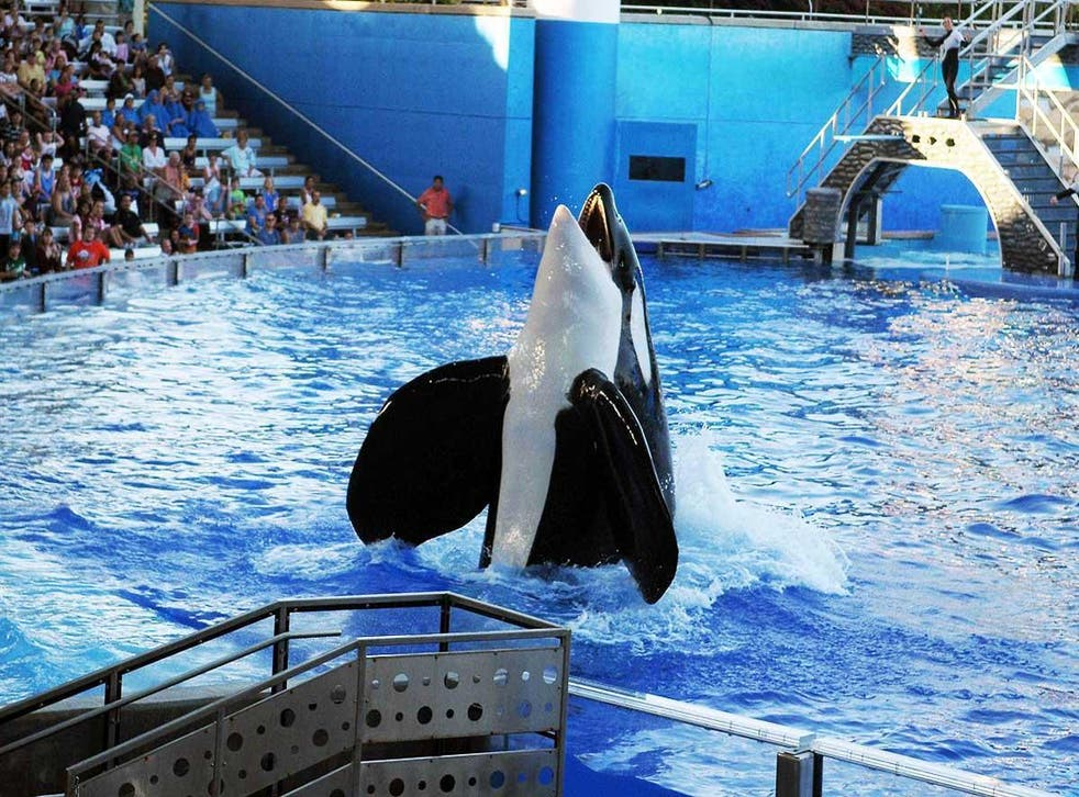 Tilikum died this week after three decades in captivity, deprived of all that was enjoyable and natural to him