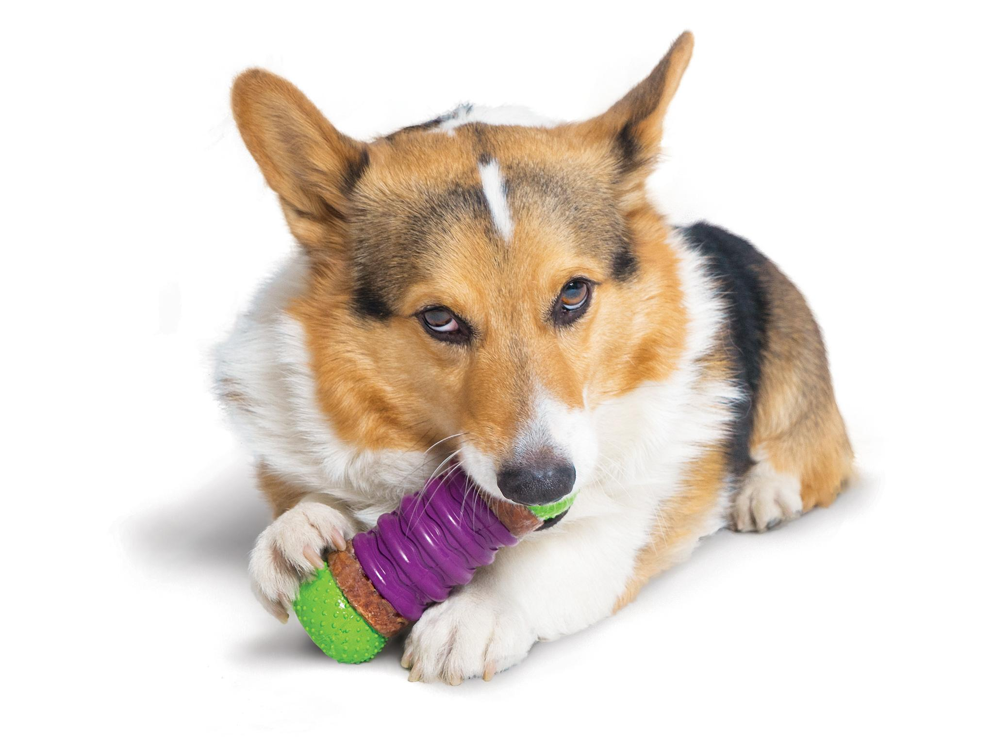 11 Best Tough Dog Toys The Independent