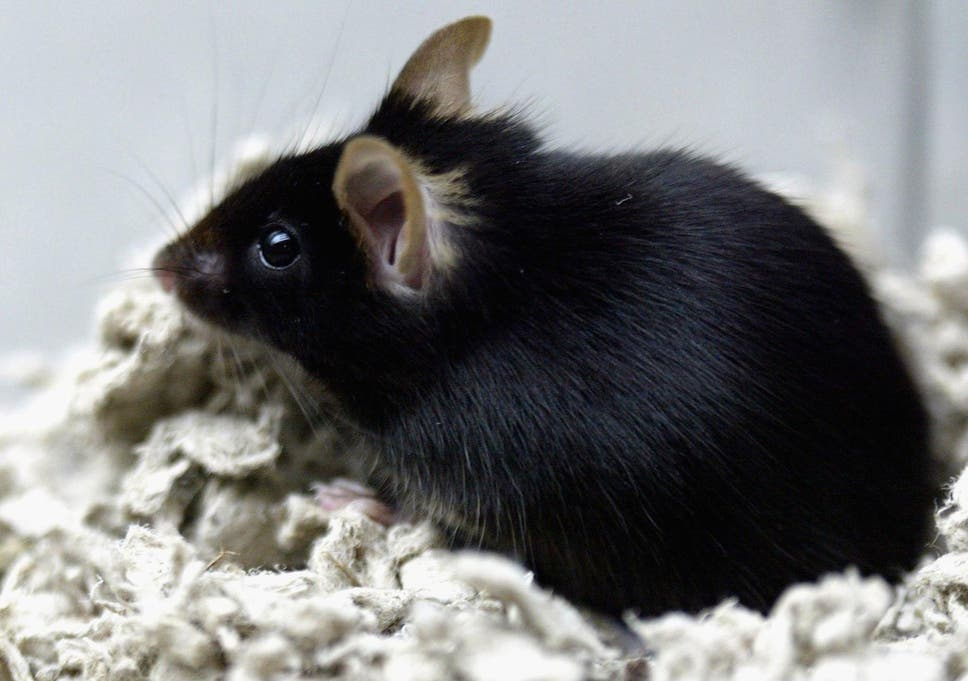 Mouse spotted on plane costs British Airways quarter of a million