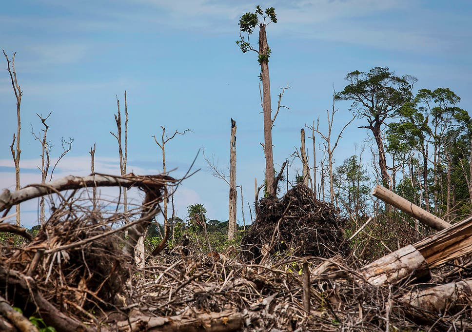 HSBC funding destruction of vast areas of Indonesian rainforest, new