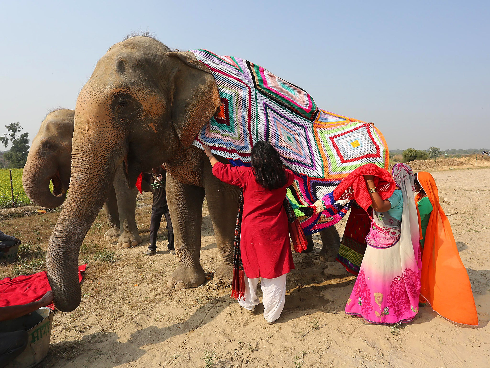 15a619f43012 Villagers knit jumpers for Indian elephants to protect the large ...
