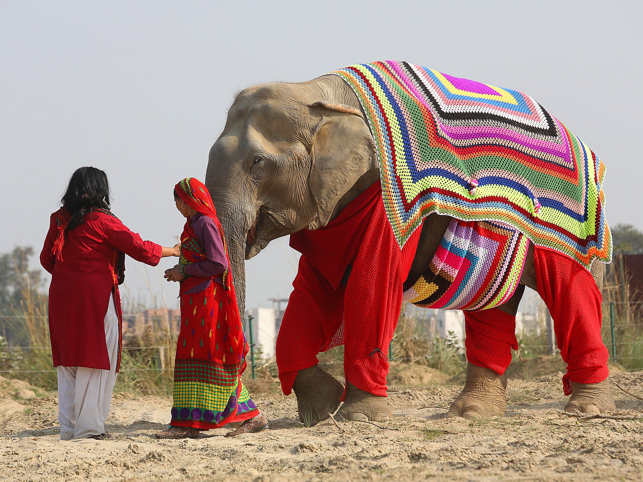 Villagers knit jumpers for Indian elephants to protect the