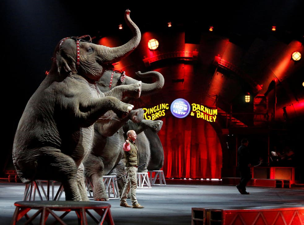 Ringling Bros and Barnum & Bailey circus elephants perform during Barnum's FUNundrum in New York in 2010