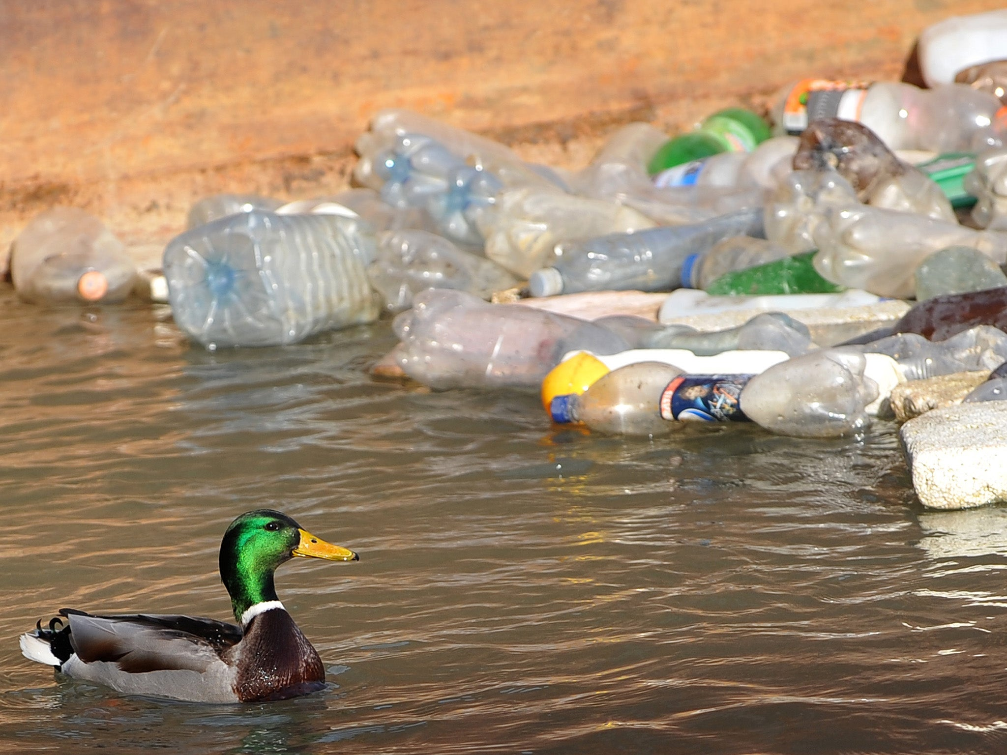 how to cut into plastic bottles