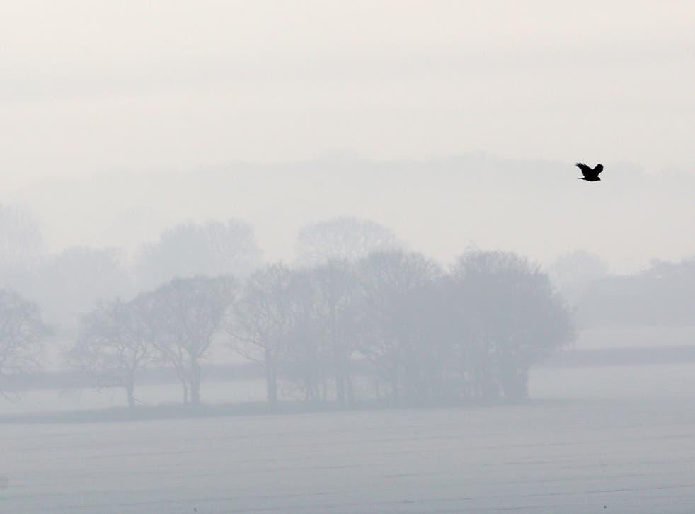 A bird flies over a frozen misty landscape in Ashford, Kent