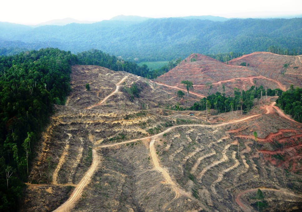 Deforestation in Sumatra, one of the world's primate hotspots