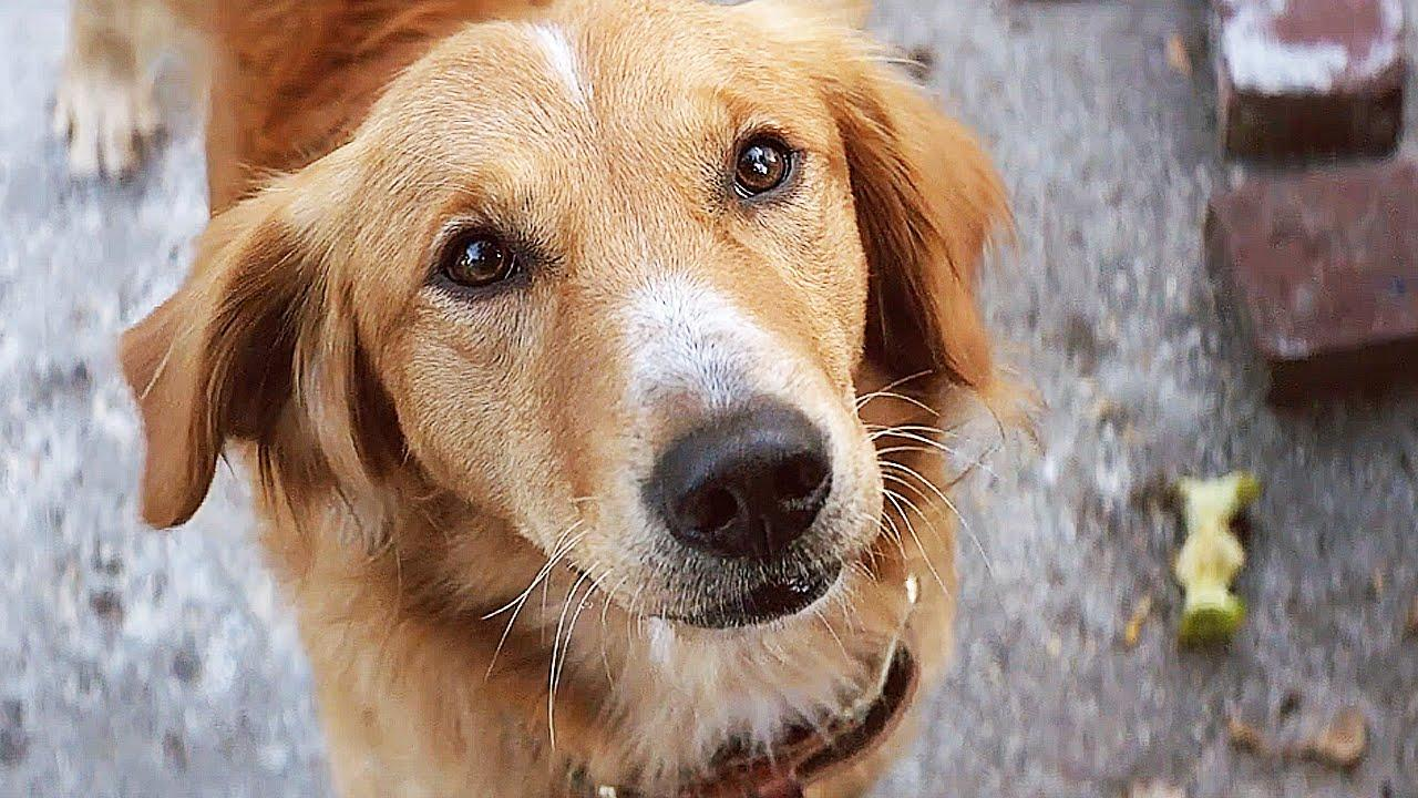 A Dog S Purpose Receives Damning Reviews Amidst Controversy The Independent The Independent