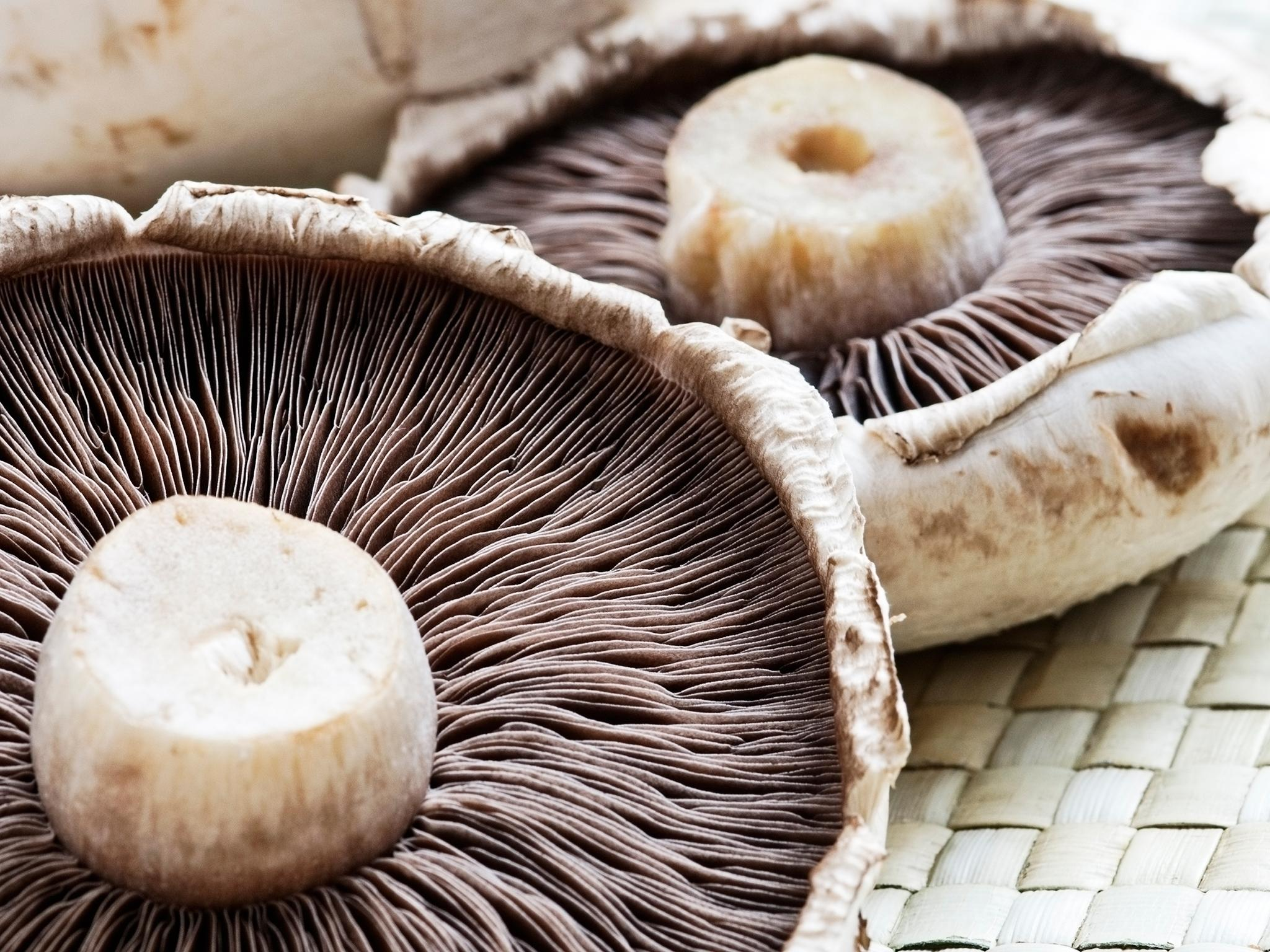 Mushroom coffee: Why people are hailing new fungus drink as next superfood