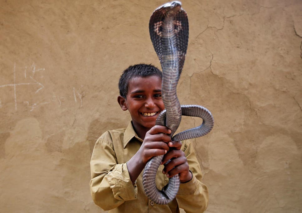 Charming snakes in Uttar Pradesh | The Independent