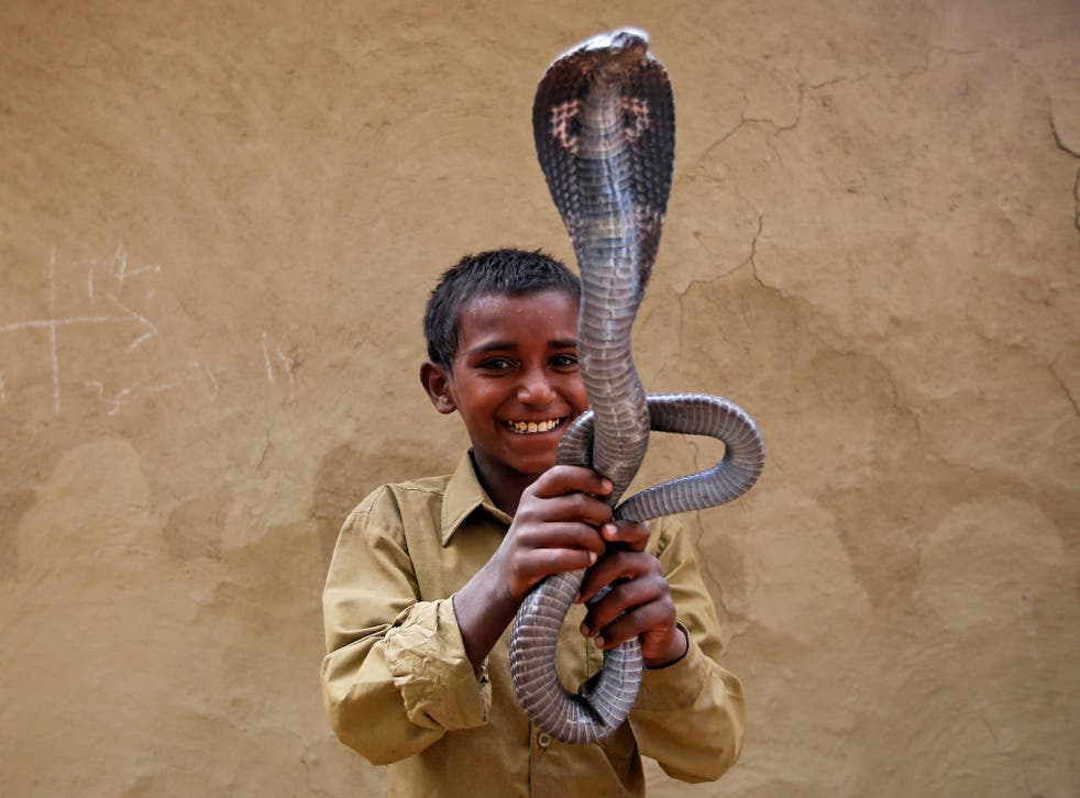 Ravi Nath poses for a photograph with a cobra snake in Jogi Dera (Snake charmers settlement), in the village of Baghpur, in the central state of Uttar Pradesh, India