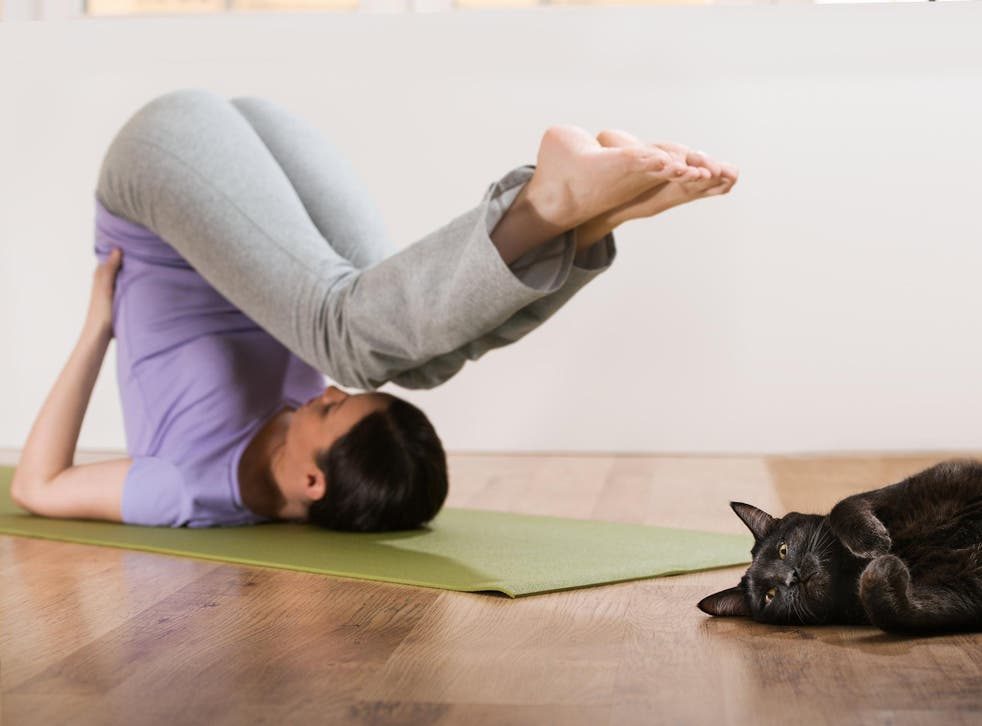 Working out beside animals is among yoga fads