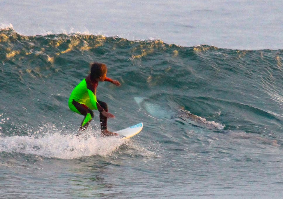 3a90364e562 10-year-old Eden Hasson surfs near what is believed to be a great