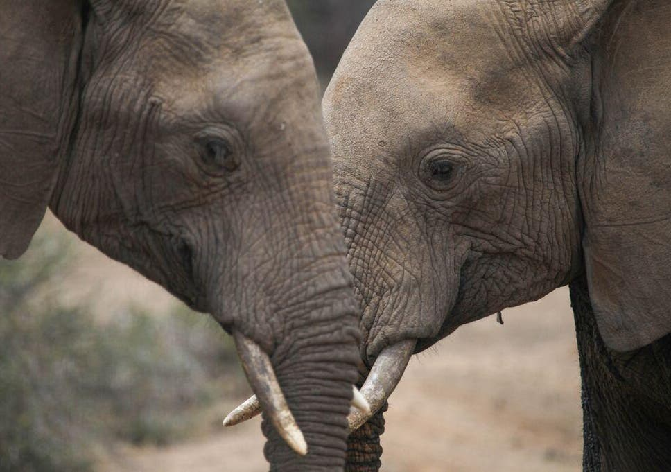79814c49fc2069 The UK must become a global leader in the fight against poaching ...