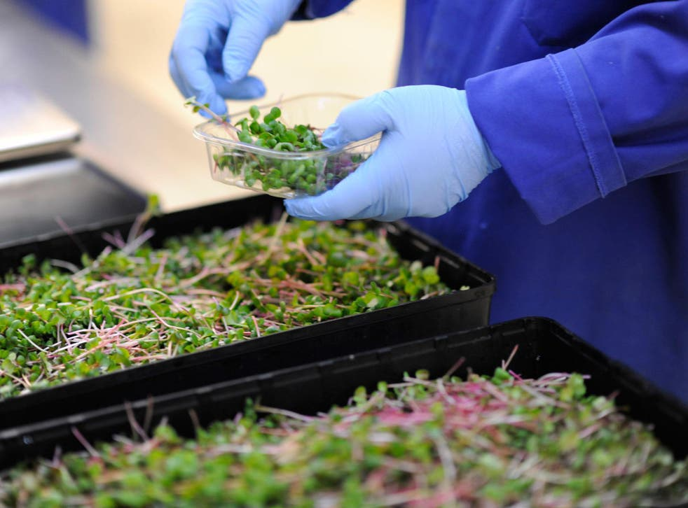 A range of five bagged salads will be available to buy from Ocado starting from this week