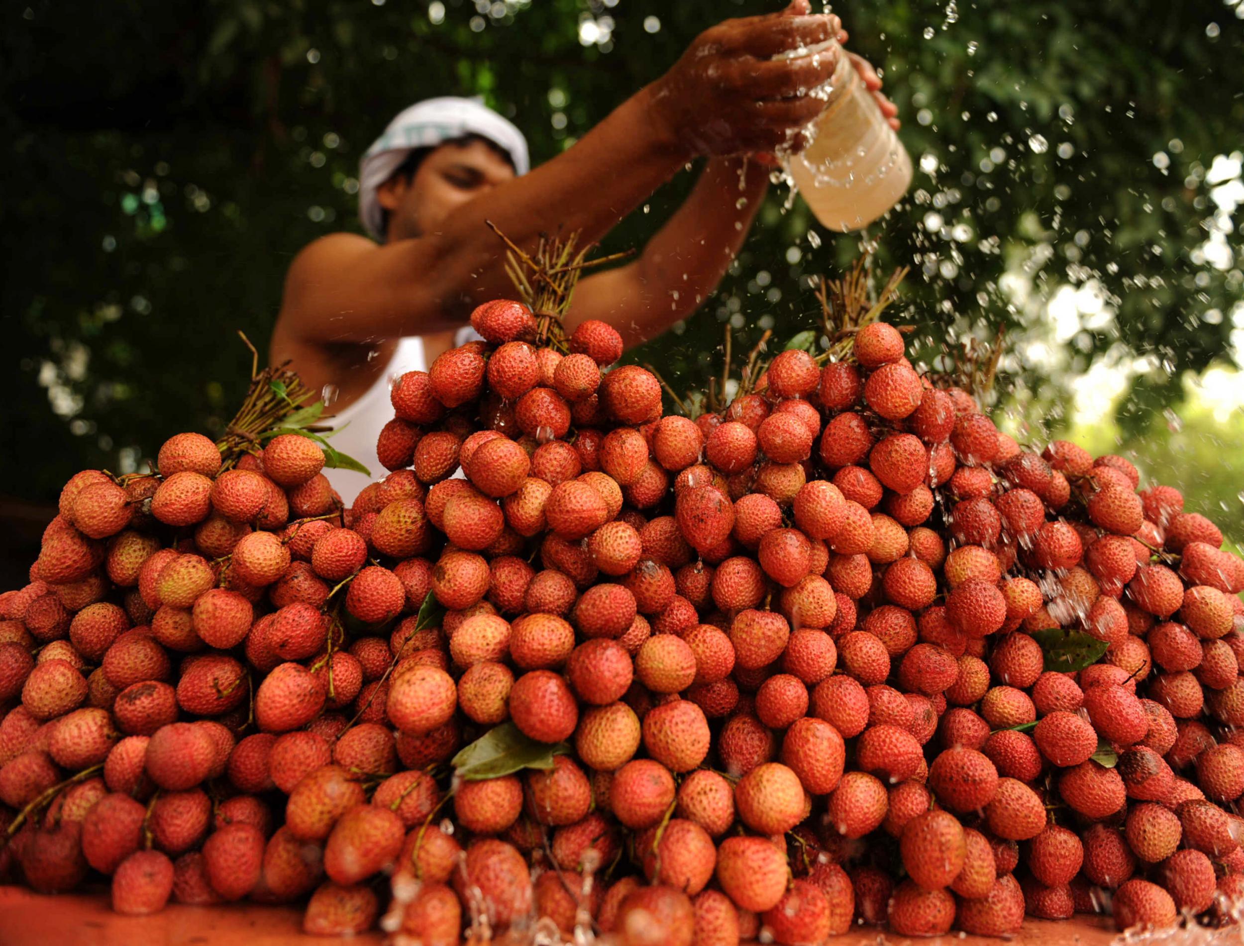 India: 43 children dead in brain disease outbreak 'linked to lychee fruit toxin'