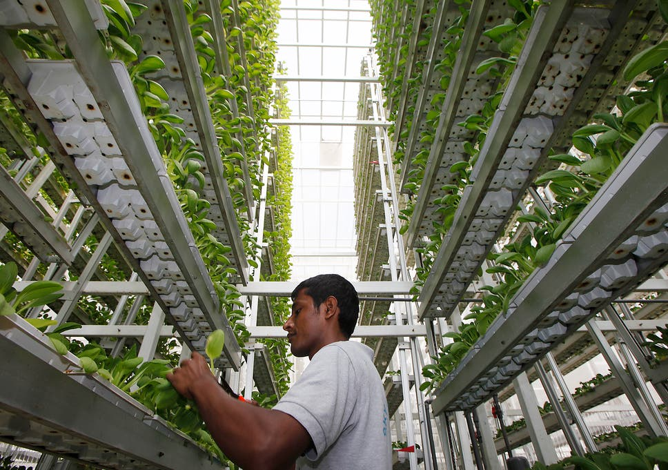 Why vertical farming isn't a miracle solution to food security | The