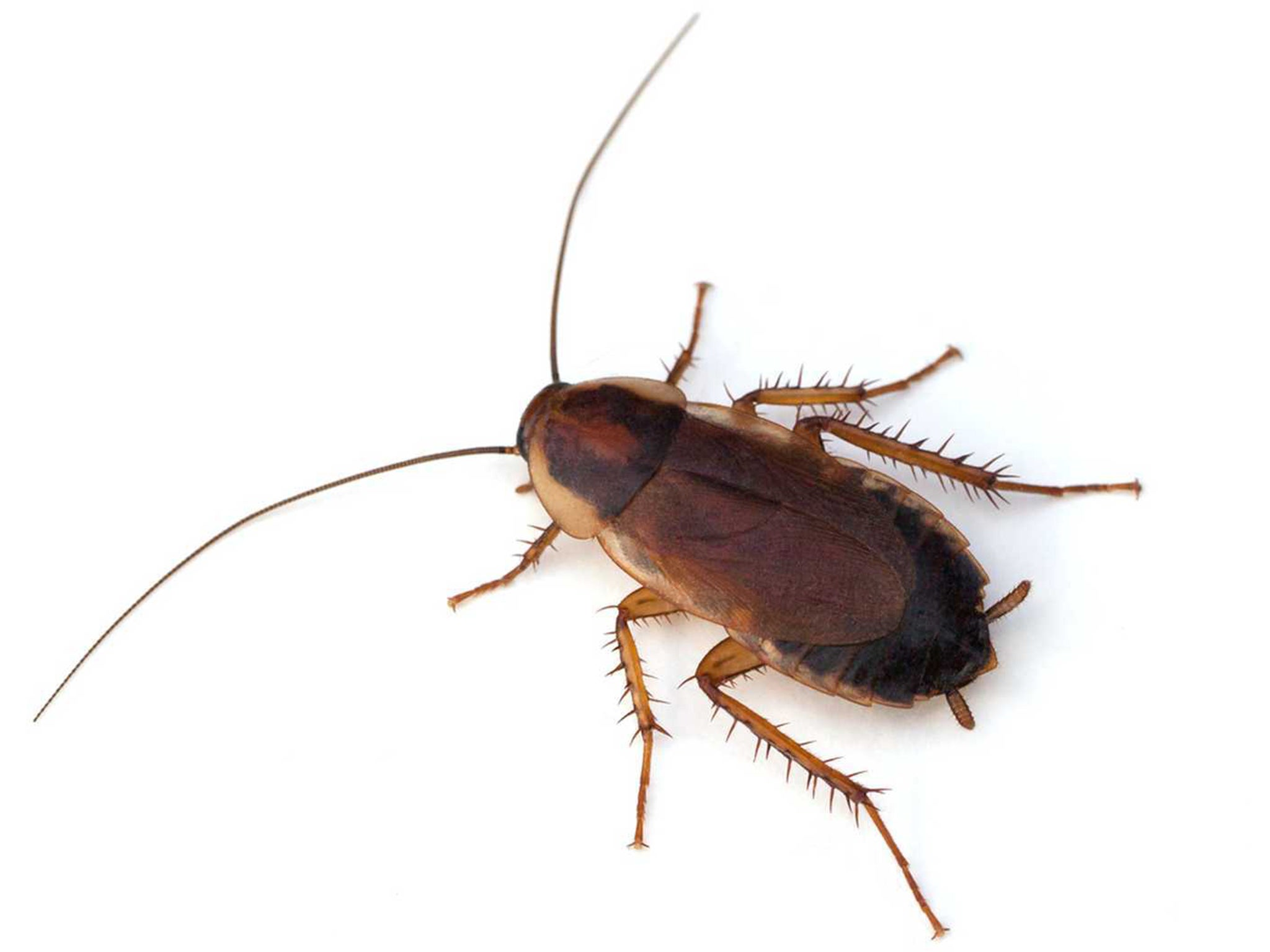 Seeing a cockroach in a dream - whats this for