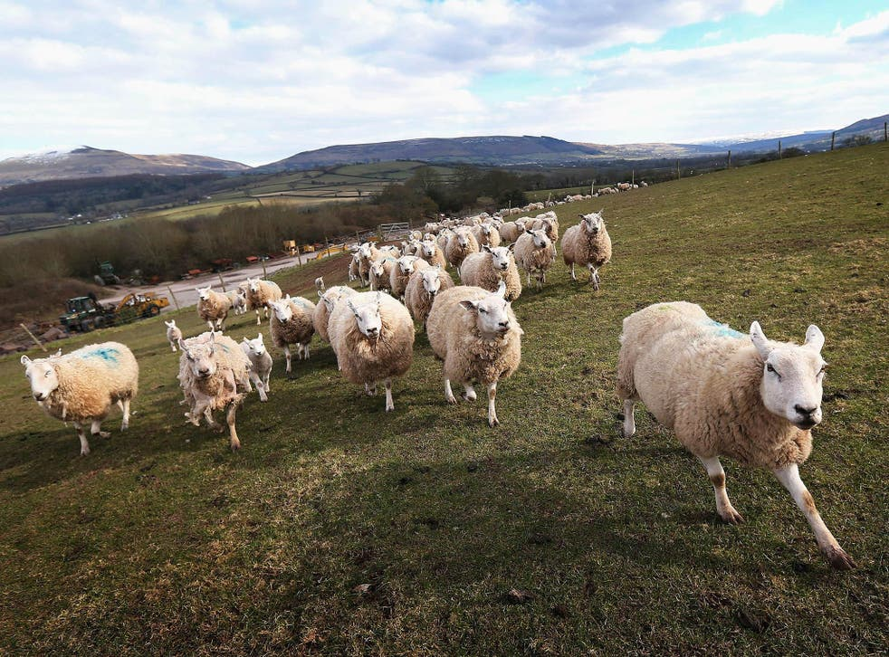 It's time to put Welsh produce in the spotlight