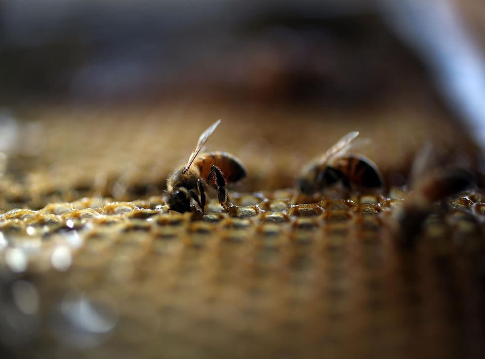 Despite their size, bees have the ability to figure complex situations