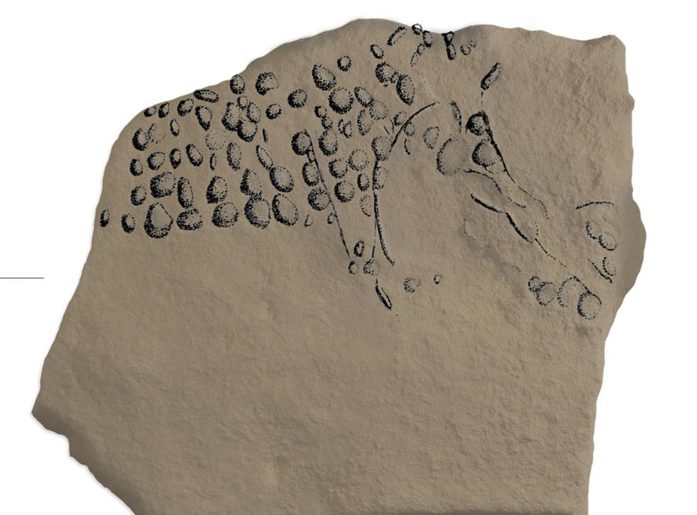 A drawing of the engraved stone highlights the individual pixels that make up a mammoth, or auroch, facing right