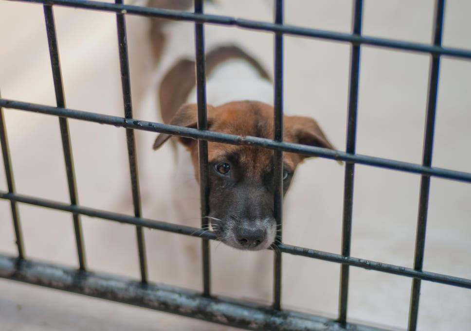 Move to ban sale of puppies in UK pet shops derailed following