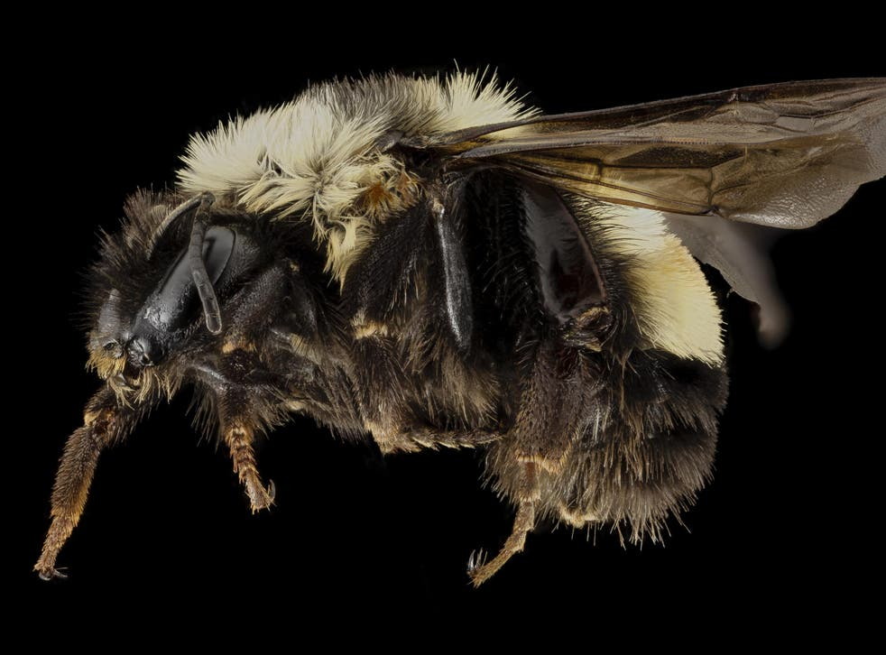 Donald Trump is facing legal action over the rusty-patched bumblebee