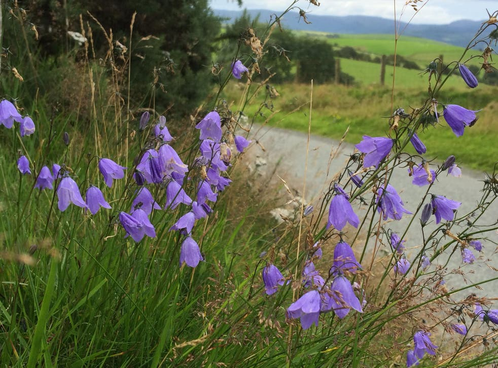 Harebells are among the flowering plants threatened by air pollution