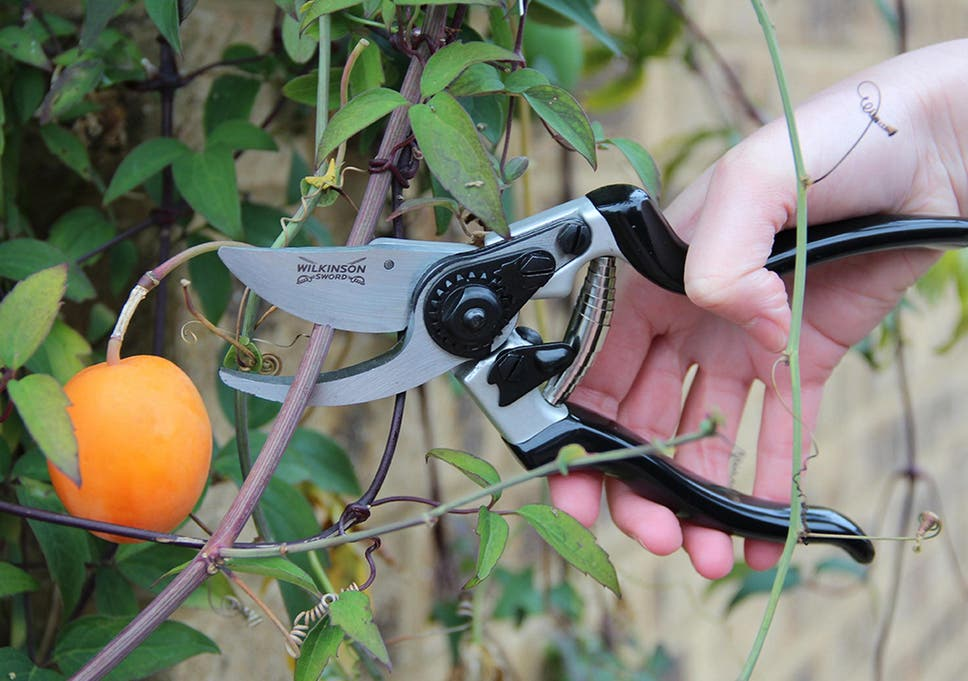 10 Best Secateurs The Independent
